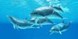 Bottlenose Dolphin - 77702049