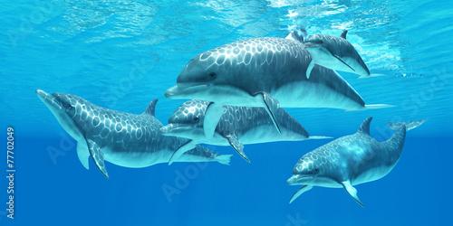 Fototapeta Bottlenose Dolphin