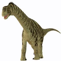 Camarasaurus Juvenile on White