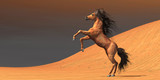 Desert Wild Horse - 77702621