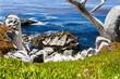 Pescadero Point at 17 Mile Drive in Big Sur California