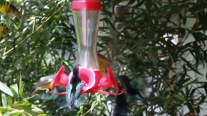 Humming-bird feeder
