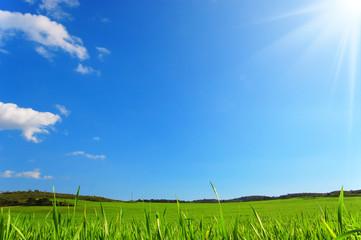 Prato verde con raggi di sole - Pianeta verde - Terra.