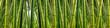 Leinwanddruck Bild - Dense Bamboo Jungle