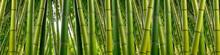 """Постер, картина, фотообои """"Dense Bamboo Jungle"""""""
