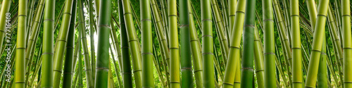 Deurstickers Bomen Dense Bamboo Jungle