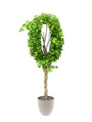 plant number zero