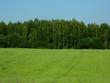 Leinwandbild Motiv Зеленое поле