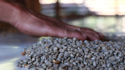 Selecting coffee beans