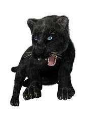 Hunting Black Panther