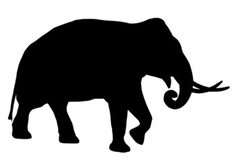silhouette walking elephant with tusks
