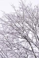 neve sui rami