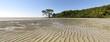 Mangroves, wet tropics, Queensland, Autralia