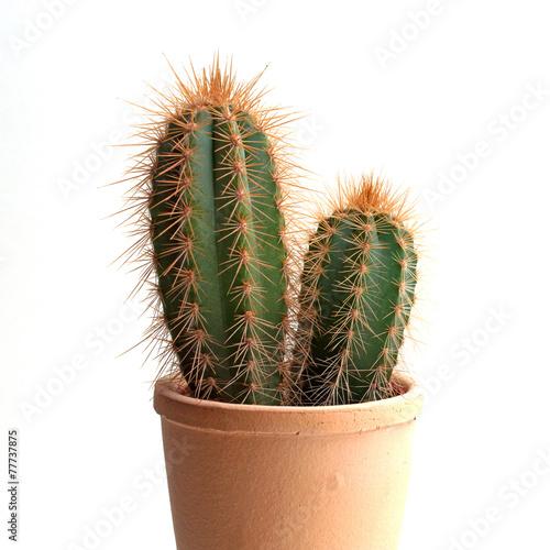 Aluminium Cactus Säulenkaktus - Cereus