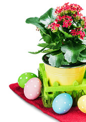 colorful easter eggs and spring flower isolated