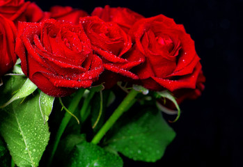 Red rose flowers with water drops over dark background