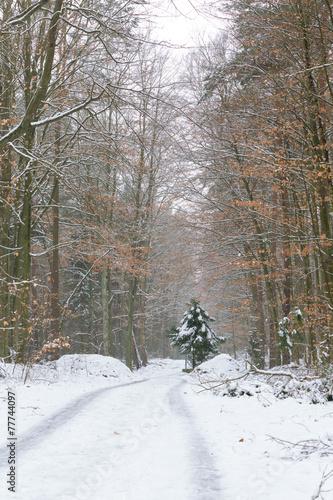canvas print picture Winterwanderung