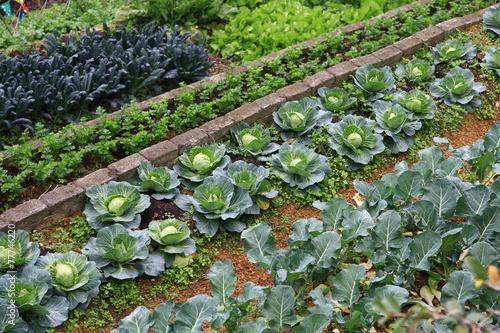 Deurstickers Groenten Organic Farm