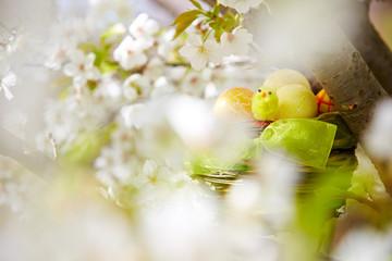 Osternest in einem Baum
