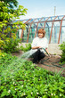 Woman watering garden beds