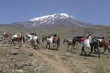 Ararat mit Lastpferden