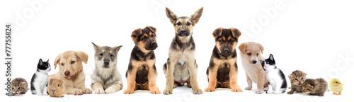 Plexiglas Kip set pets