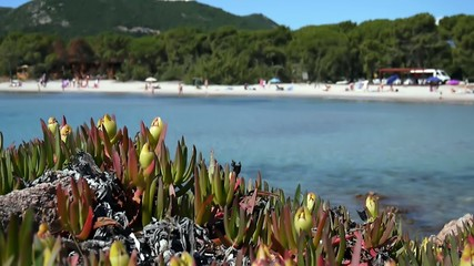 Corsica mare spiaggia