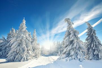 schneebedeckte Tannen im Wald