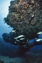 Caribbean Sea, Cuba, tropical yellow tales - FILM SCAN