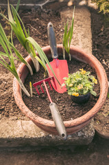 Hands planting little flowers in a pot
