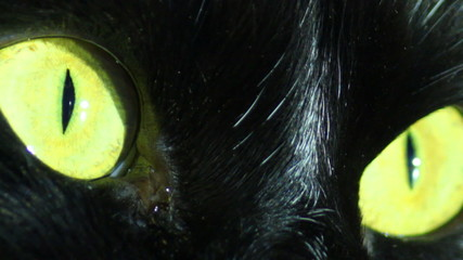 Black Cat's Eyes