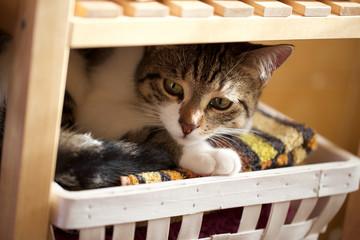 cat undercover