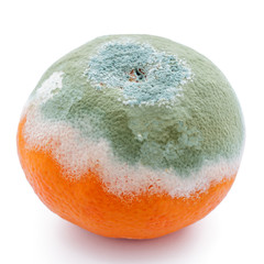 Schimmel befallene Clementine