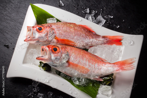 アカウオ Beryx splendens Red snapper
