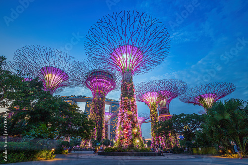Foto op Canvas Singapore Night view of The Supertree Grove at Gardens by the Bay in Sing