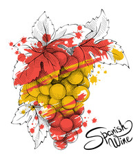 Bunch of grapes - the symbol of Spain. Vector illustration.