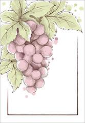 Wine label. Vector illustration.