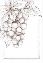 Wine label. Graphic vector illustration.
