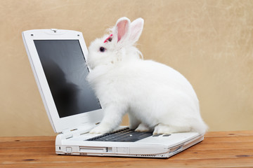 Cute bunny studies computer technology
