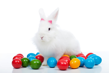 Cute white easter bunnz among colorful eggs