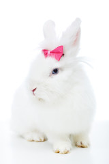 Cute white rabbit with pink bow