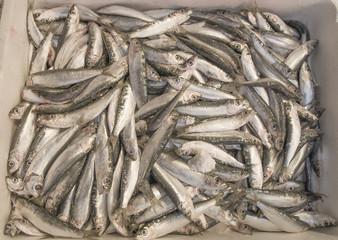 sardines pile in basket