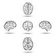 brains from different sides isolated