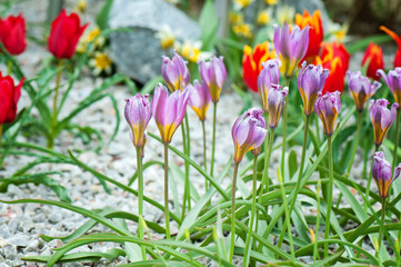 Purple and red flowers growing in the garden