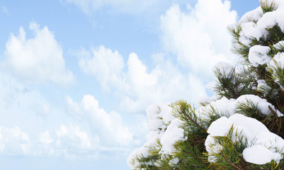 green fir tree on blue sky background