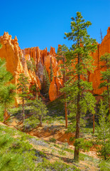 Beautiful colorful Bryce canyon National park, Utah, USA