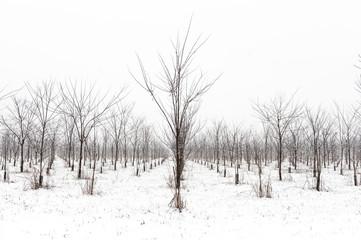 Inverno campagna innevata