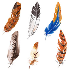 Watercolor illustration with feathers. Animal background