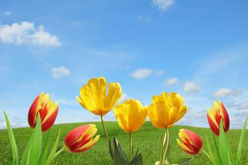 Frühlings-Hintergrund mit Tulpen