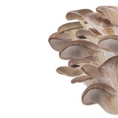 Oyster mushrooms, close-up.